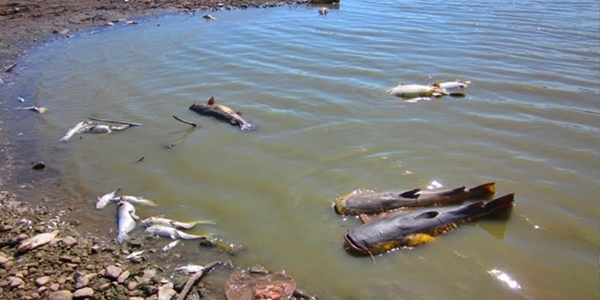News death of arizona s largest lake affects san carlos for Apache lake fishing
