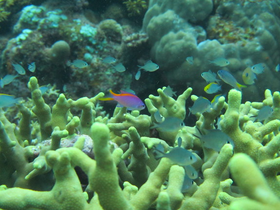 Tropical Fish Survival Struggle in Warming Waters
