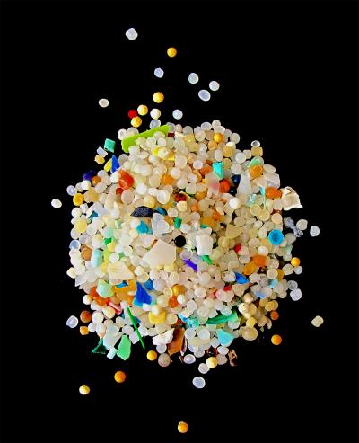 Plastic waste ingested by worms threatens marine food chains 1