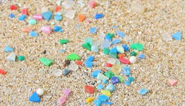 Plastic waste ingested by worms threatens marine food chains 2