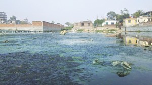 What was once a canal bubbling with life and bringing prosperity to communities in Savar is now a mass of mud, algae and garbage peering over murky waters. (Photo credit: Rashad Ahamad)
