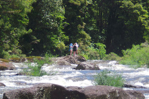 People are being advised not to swim or fish in the Wairoa River at McLaren Falls.
