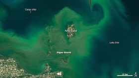 A vast Lake Erie algae bloom returns, captured by a NASA satelite on July 28. Photo Credits: NASA/Earth Observatory