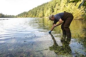 toxic algae