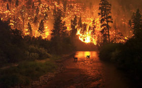 wildfires and water