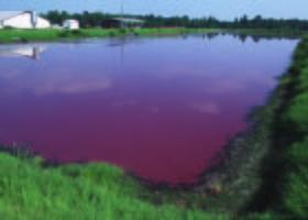 hog waste lagoons